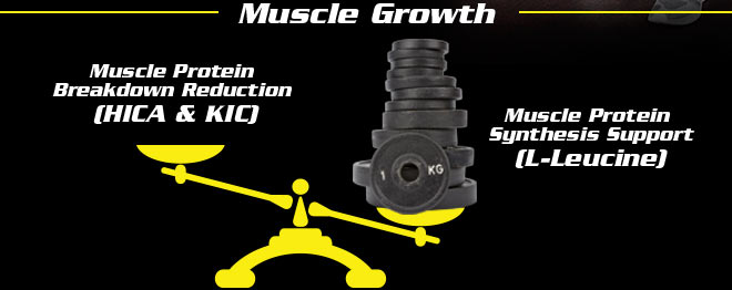 Muscle Growth. Muscle Protein Breakdown Reduction. (HICA and KIC). Muscle Protien Synthesis Support (L-Leucine)