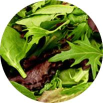 Leafy Fiber