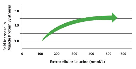 Extracellular Leucine