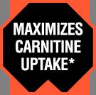 Maximizes Carnitine Uptake*