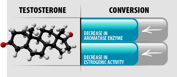 Testosterone Conversion. Support Aromatase Enzyme Balance. Promote Balance in Estrogenic Activity.*