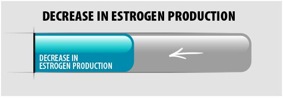 Support Estrogen Balance*