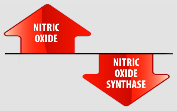 Ntric Oxide. Nitrix Oxide Synthase
