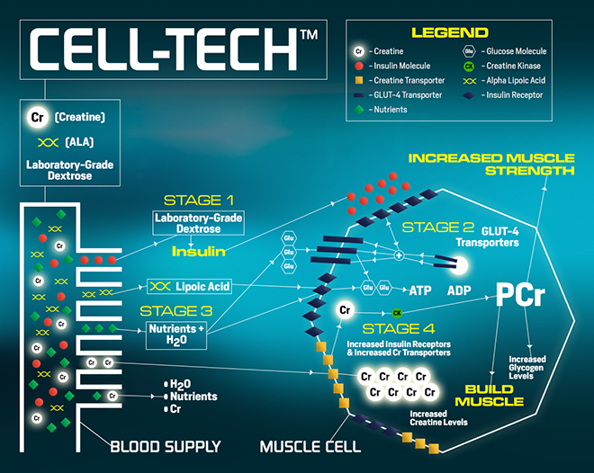 cell-techmuscletech at bodybuilding - best prices on cell-tech!