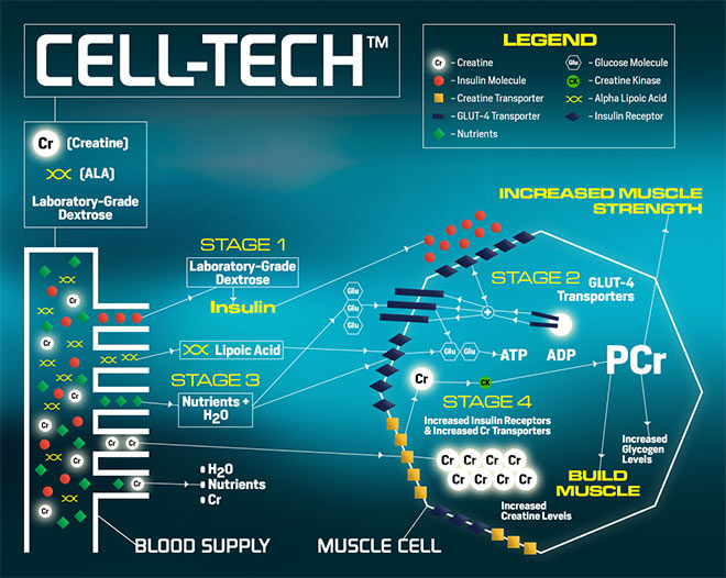 Cell Tech By Muscletech At Bodybuilding Com Best Prices