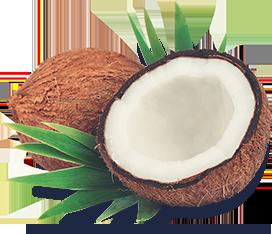 Photo of a split open coconut