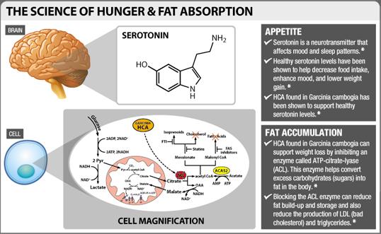 best diet pill fat burner weight loss reviews garcinia cambogia