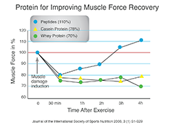 Protein for Improving Muscle Force Recovery
