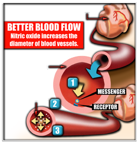bloodflow-illustration